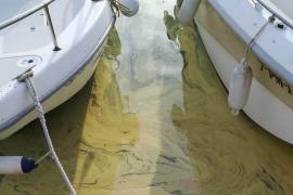 Pollen im Hafenbecken von Port de Sóller.