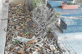 Friedhof von Palma völlig verdreckt