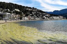 Kiefernpollen färbten auch den Strand von Port de Sóller in der vergangenen Woche gelb ein.