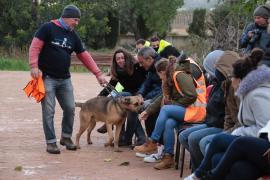 Tierschützer fordern Stadt auf, in Son Reus nachzubessern