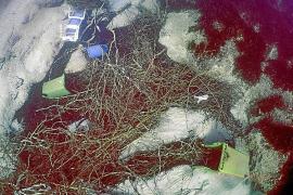 Die Wassermassen während der Flut haben unter anderem Autos, Container, Einkaufswagen und sogar ganze Bäume weggespült.