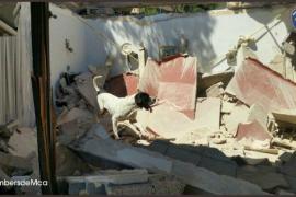 Feuerwehr-Suchhund von Sant Llorenç ist tot