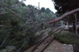 Umgestürzte Bäume blockierten die Schienen der Sóller-Bahn.