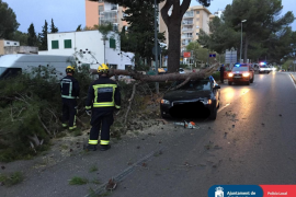 Baum stürzt in Palmanova auf ein fahrendes Auto