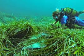 Rechtspartei auf Mallorca will Schutz der Meere lockern