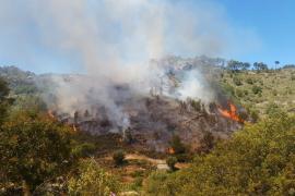 Ein Waldstück bei Andratx brennt
