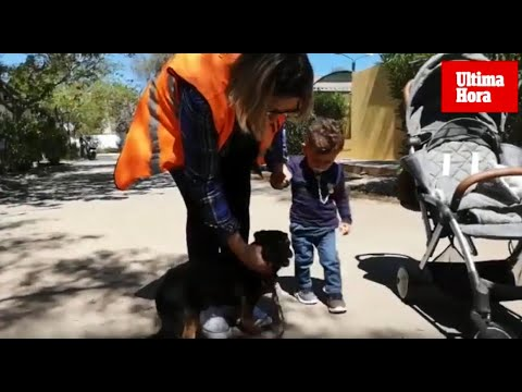 Happy End für Tierheim-Hund auf Mallorca