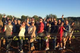 Blogger besuchen Weinregion Binissalem
