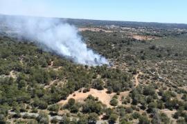 Waldbrand im Gebiet von Son Verí auf Mallorca gemeldet