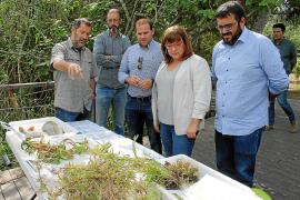 Die balearische Vize-Ministerpräsidentin Bel Busquets und ihr Berater Vicenç Vidal begutachteten das Projekt zur Beseitigung inv