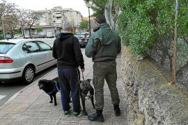 Geldbußen für Hundebesitzer in Calvià