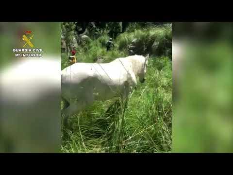 Bergrettung befreit Pferd aus Torrente in Escorca