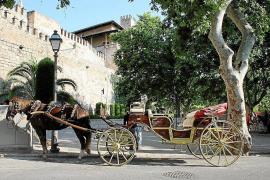 Pferdekutsche im Zentrum von Palma.
