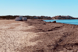 Es-Trenc-Strand bei Sa Ràpita noch immer voller Seegras