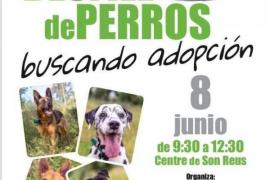Son-Reus-Hunde suchen am Samstag ein neues Zuhause