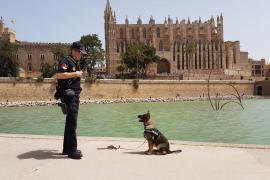 Neuer Drogenspürhund mit Knuddelfaktor