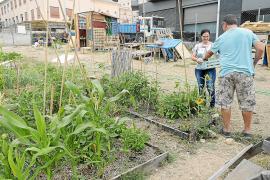 Palma entdeckt das Urban Gardening