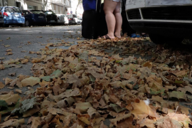 Blätterfall auf Mallorca erinnert an Herbst