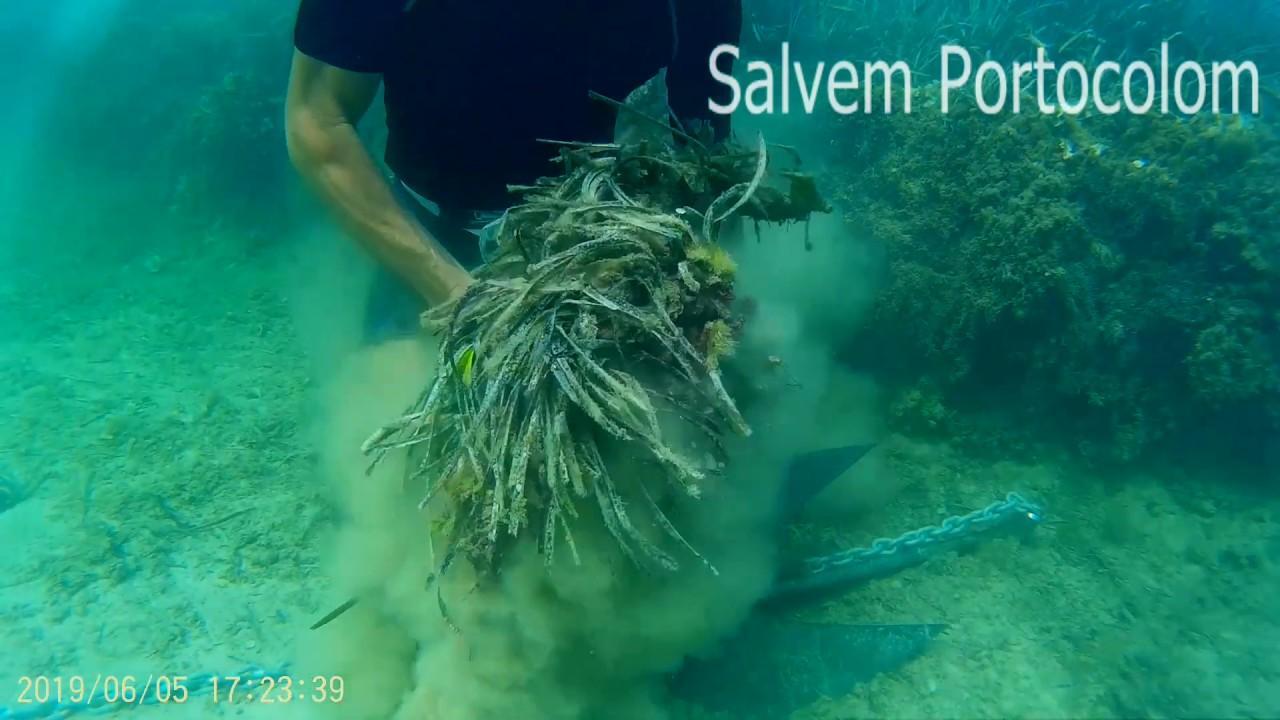 Yachten zerstören Posidonia vor Portocolom