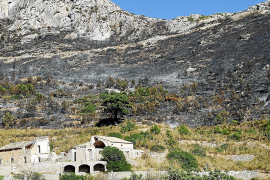 Erst 50 Prozent nach Mega-Waldbrand wiederaufgeforstet