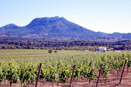 Mallorca-Landgut Es Fangar von Eisenmann-Insolvenz nicht betroffen
