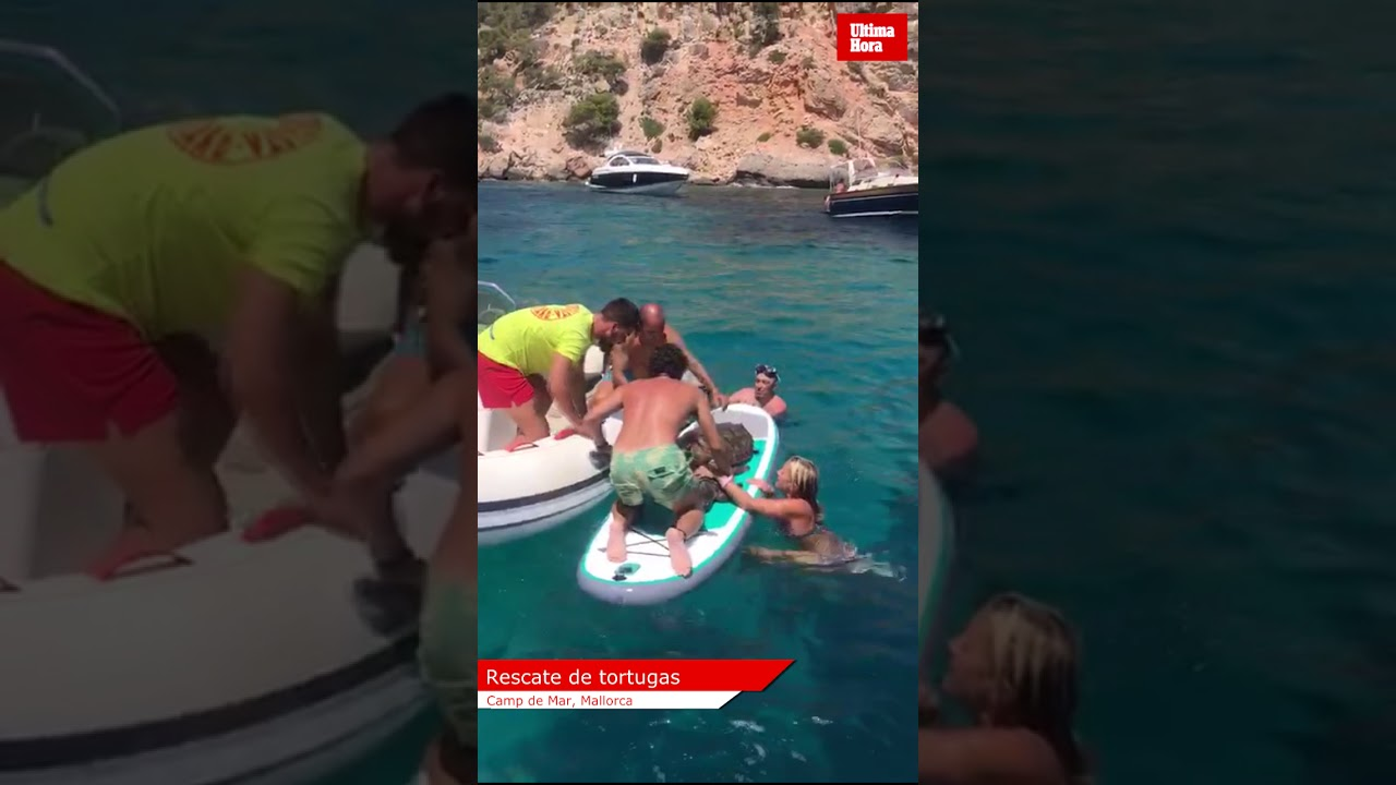 Meeresschildkröten bei Camp de Mar gerettet