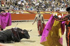 Stiere für die Corrida sind auf Mallorca eingetroffen