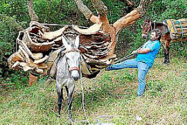 TV-Tipp: Die Korkwälder von Los Alcornocales