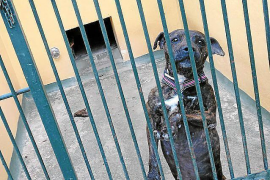 Ließ das Tierheim auf Mallorca einen Hund verbluten?
