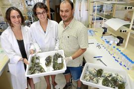 Wissenschaftler der UIB untersuchen den Verdauungstrakt, um Hinweise auf die Ernährung der Tiere zu erhalten.