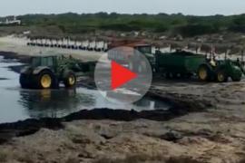 Bagger schaffen Seegras am Es-Trenc-Strand weg