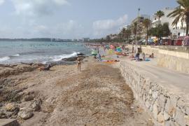 Der Strand von Cala Millor soll regeneriert werden