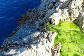Grünliche Brühe fließt in Port d'Andratx ins Meer