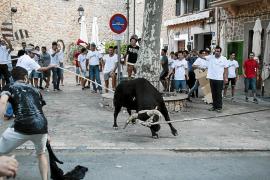 """Stier für den """"Correbou"""" von Fornalutx vorgestellt"""