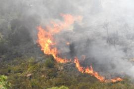 100 Hektar bei Waldbränden auf Mallorca zerstört