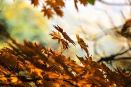 Mallorca-Herbst soll wärmer als üblich werden