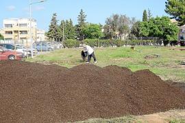 Öffentliches Gemüsefeld in Son Ferrer stinkt zum Himmel