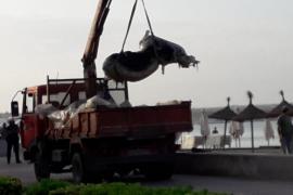 Kuh-Kadaver vom Ballermann-Strand entfernt