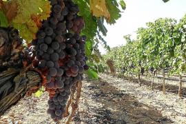 US-Strafzölle beunruhigen Wein- und Käseproduzenten