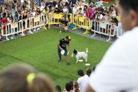 Animal Fest in Porto Pí endet mit 17 Tieradoptionen