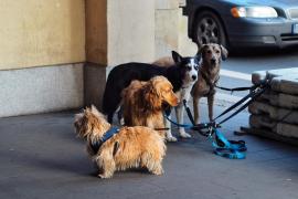 Balearen-Regierung will den Tierschutz stärken