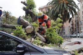 Mega-Baum an Endhaltestelle der Playa-Busse umgestürzt