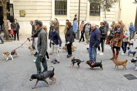 Haustierhalter sollen kontrolliert werden