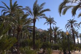 TV-Tipp: Die Stadt Elche und ihre Palmen