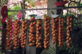 Mallorca produziert immer mehr Strauch-Tomaten