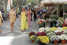 Palmas Rambla ist jetzt ein Blumenmeer