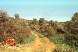 Pilzsammlerin entdeckt Leiche bei Palma