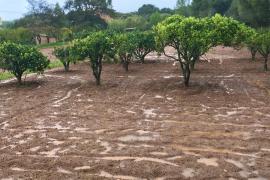 Kälteschwall lässt Werte auf Mallorca in den Keller fallen