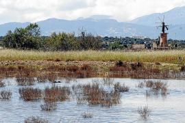 Venedig-Flut: Experten sehen schwarz auch für Mallorca