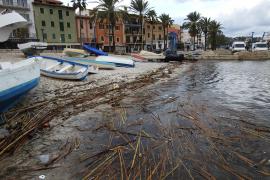 Hafenbecken von Port d'Andratx voller Müll